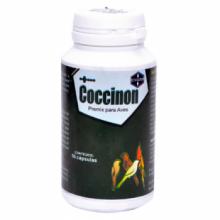Coccinon 50 cápsulas